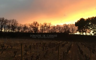 A beautiful sunset on the vineyard of Domaine de Cabasse
