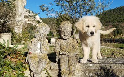 Die drei Kinder der Domaine de Cabasse